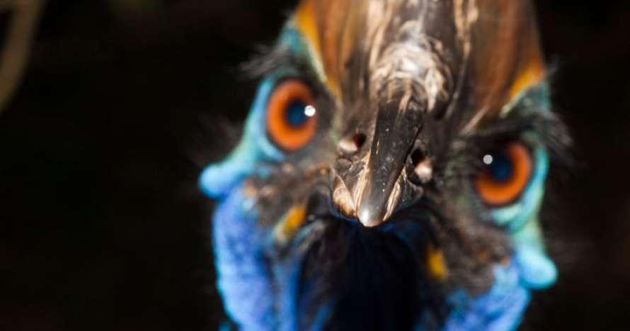 Самая рискованная вмире птица убила своего владельца вСША
