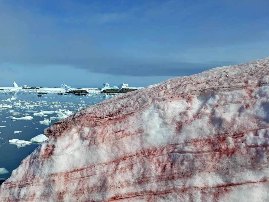 На базе Вернадского в Антарктиде на снегу появились Алые паруса (ФОТО)