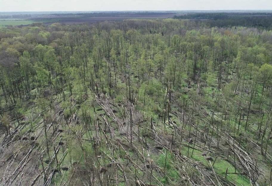 Смерч на Житомирщине «снес» целый лес