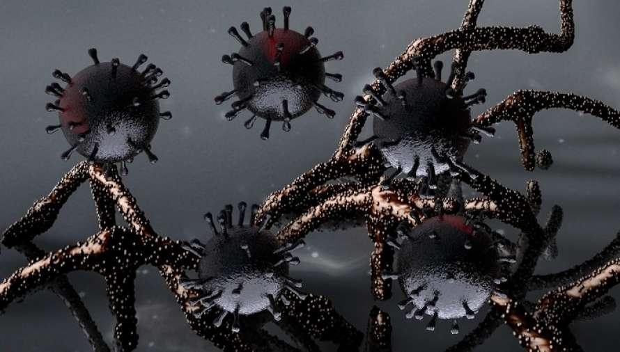 Ученые установили степень родства коронавируса из Уханя и Парижа